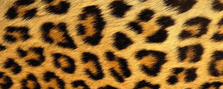 leopard-print-header