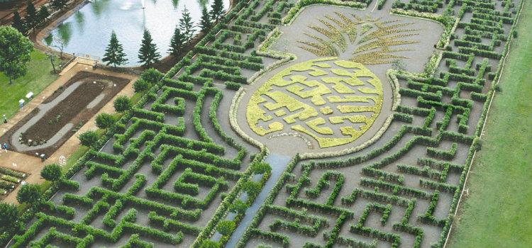 Dole-Pineapple-Maze