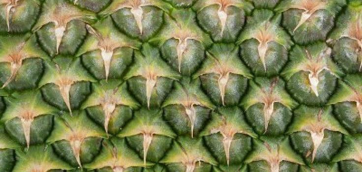 pineapple fractal
